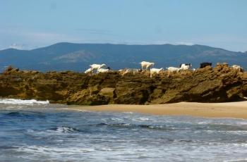 Wild wild west Sardinia