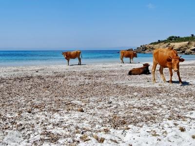 Top 10 don'ts in Sardinia