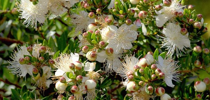 Wild herbs of Sardinia