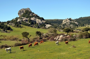 Fooding and wining in Gallura