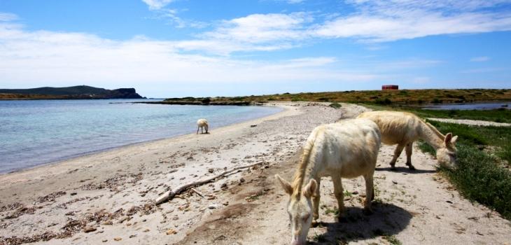 North Sardinia marine parks